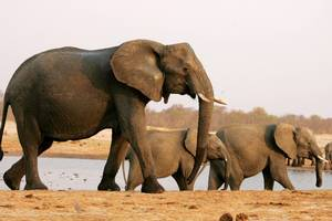 Zimbabwe Holiday and Travel Special Offers