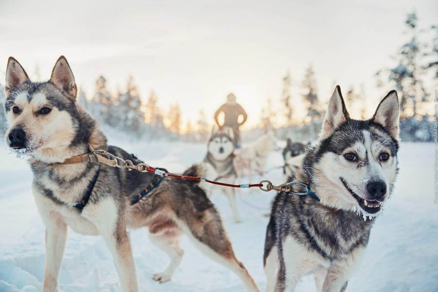Winter wonderland and Santa
